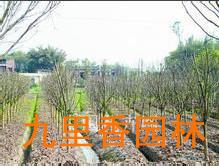 广州花木租赁