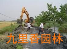 广州植物租摆