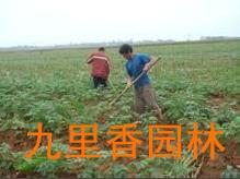 广州花卉租赁