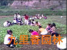 广州植物租赁