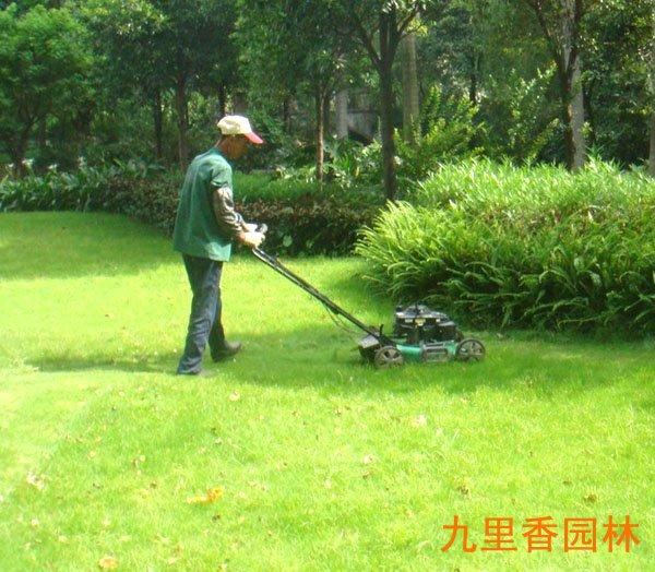 广州植物绿墙